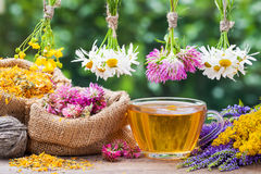 Healing herbs, bags with dried plants and tea cup Royalty Free Stock Image