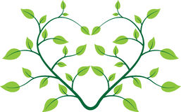 Heart plant Royalty Free Stock Photography