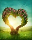 Heart shaped tree Stock Photos