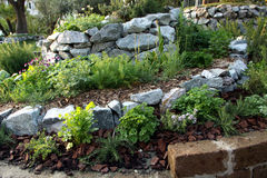 Herbs and aromatic plants garden bed Stock Photos