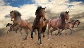 Herde von Pferden Lizenzfreies Stockbild