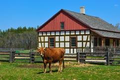 Het Landbouwbedrijfhuis van koe Historisch Schultz Royalty-vrije Stock Afbeeldingen