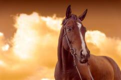 Het Paard van de oorlog Stock Afbeelding