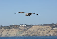 High Tide Coastal Waves Hitting the La Jolla California Shore Royalty Free Stock Photography
