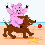 Hog sitting on a dog Stock Image
