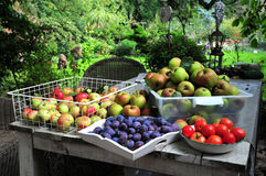 Home gardening harvest Stock Photography