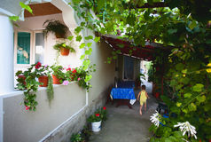 Home with vine alley Stock Image