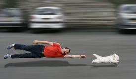 Honds onderwijs Stock Fotografie