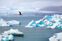 Horizontal arctique Photo libre de droits