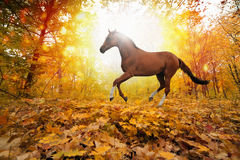 Horse in fall park Royalty Free Stock Images