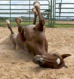 Horse fun Royalty Free Stock Photography