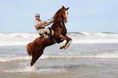 Horse rearing in sea Royalty Free Stock Photos