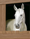 Horse in a stable Royalty Free Stock Image