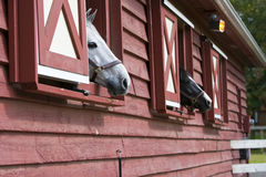 Horses in a Barn Stock Images