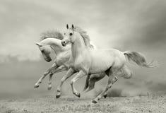 Horses run Stock Images