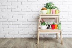 House plants, succulents Stock Photography