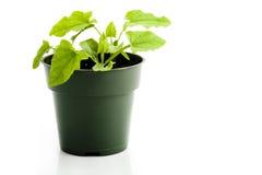 Houseplant Stock Image