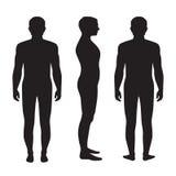 Human body anatomy, Stock Photos