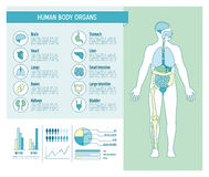 Human body infographics Royalty Free Stock Images