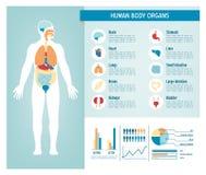 Human body infographics Stock Photo