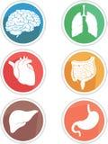 Human Body Organs Icon Stock Photos