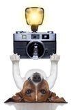 Hundephotograph Stockbilder