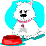 Hungry dog & empty dish Stock Photo