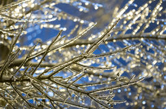 Ice on branches Royalty Free Stock Image