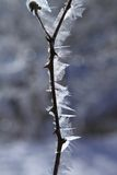 Ice frost in winter Royalty Free Stock Photography