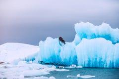 Icebergs bleus dans la lagune glaciaire de Jokulsarlon Image stock