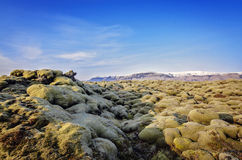 Iceland Lava field Royalty Free Stock Photo