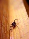 ilsken kommande spindel dig Arkivfoto
