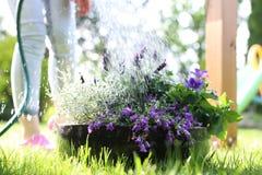 Irrigation of plants Stock Image