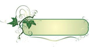 Ivy. Decor Stock Image