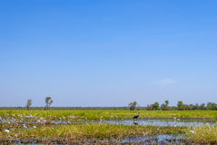 Kakadu National Park (Northern Territory Australia) Royalty Free Stock Photo