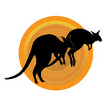 Kangaroos Running Stock Photo
