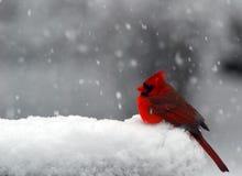 Kardinaal in Sneeuw Royalty-vrije Stock Fotografie