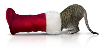 Kat in Kerstmiskous Stock Fotografie