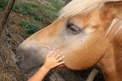 Kid Stroke Reassuring Horse Love Friends Royalty Free Stock Photos