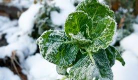 Killing Frost Stock Image
