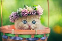 Kitten wearing chaplet Stock Image