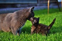 Kitty Bonding Stock Image