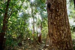 La nebbia ed il sole rays nella giungla densa verde Fotografie Stock Libere da Diritti