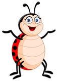 Lady bug Royalty Free Stock Images