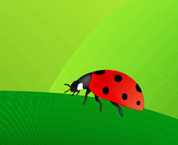 Ladybird (AI format available) Stock Photography