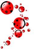 Ladybirds illustrations Stock Photography