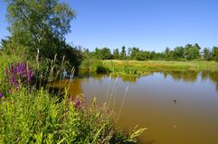 A lake in a migratory bird sanctuary Royalty Free Stock Images