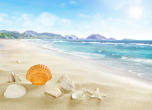 Landscape with shells on sandy beach. Royalty Free Stock Photos