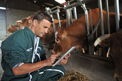Landwirt und Kühe Stockbilder