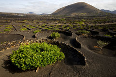 Lanzarote spain la geria cultivation viticulture winery Royalty Free Stock Images